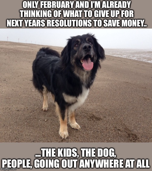 Only February | ONLY FEBRUARY AND I'M ALREADY THINKING OF WHAT TO GIVE UP FOR NEXT YEARS RESOLUTIONS TO SAVE MONEY.. ...THE KIDS, THE DOG, PEOPLE, GOING OUT | image tagged in bad pun dog,dogs,funny dogs | made w/ Imgflip meme maker