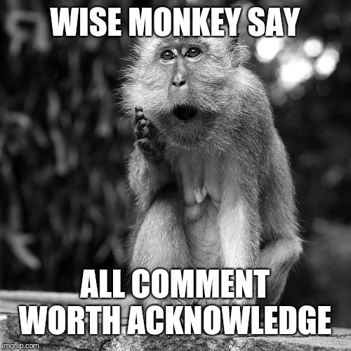 Wise Monkey | WISE MONKEY SAY ALL COMMENT WORTH ACKNOWLEDGE | image tagged in wise monkey | made w/ Imgflip meme maker