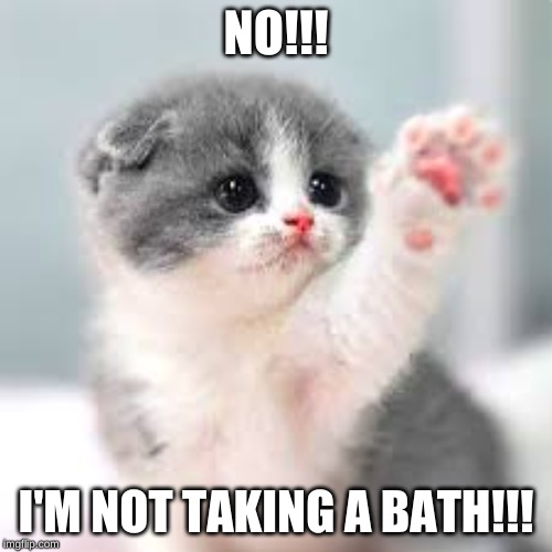Image Tagged In Cute Kitty Baths Adorable Imgflip