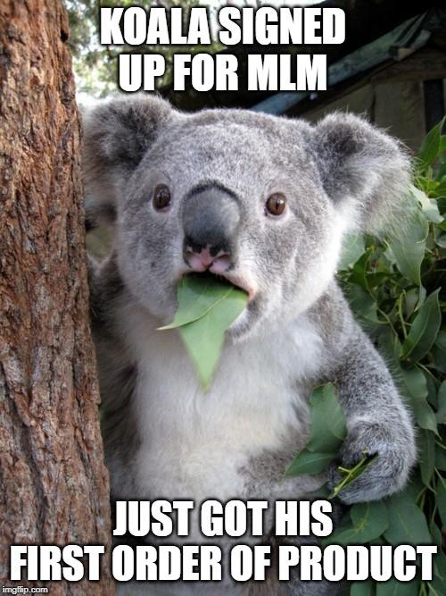 Koala gets MLM products