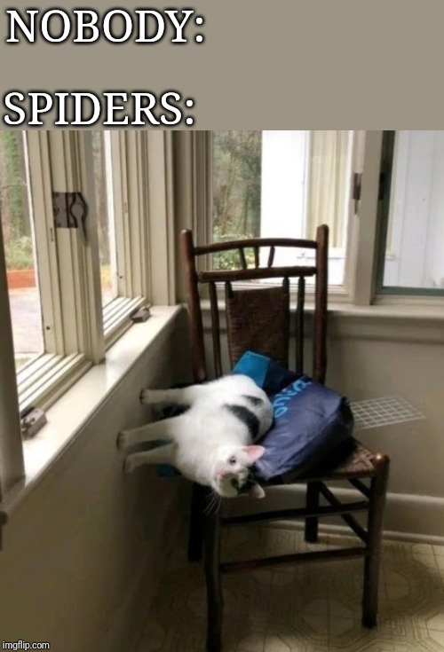 Spider cat, spider cat, doing everything a spider cat does, can he swing? From a web? No he can't, he's a cat. SPIDER CAT!!! | NOBODY: SPIDERS: | image tagged in memes,funny,spider,cats,spider cats,i ran out of tag ideas | made w/ Imgflip meme maker