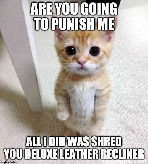 Cute Cat |  ARE YOU GOING TO PUNISH ME; ALL I DID WAS SHRED YOU DELUXE LEATHER RECLINER | image tagged in memes,cute cat | made w/ Imgflip meme maker