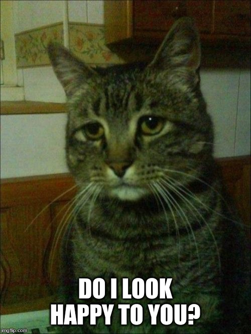 Depressed Cat Meme | DO I LOOK HAPPY TO YOU? | image tagged in memes,depressed cat | made w/ Imgflip meme maker