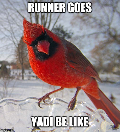 Cardinal be like | RUNNER GOES YADI BE LIKE | image tagged in cardinals,memes,funny memes | made w/ Imgflip meme maker
