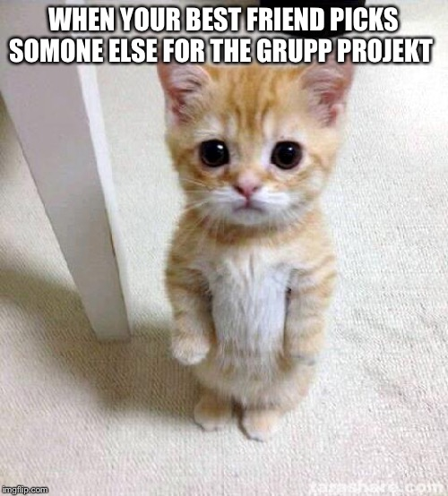 Cute Cat |  WHEN YOUR BEST FRIEND PICKS SOMONE ELSE FOR THE GRUPP PROJEKT | image tagged in memes,cute cat | made w/ Imgflip meme maker