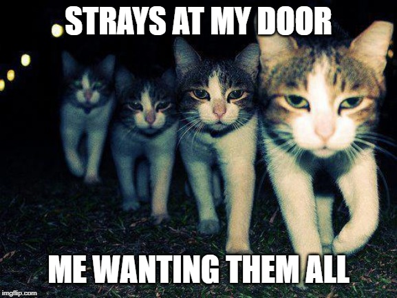 Wrong Neighboorhood Cats | STRAYS AT MY DOOR ME WANTING THEM ALL | image tagged in memes,wrong neighboorhood cats | made w/ Imgflip meme maker