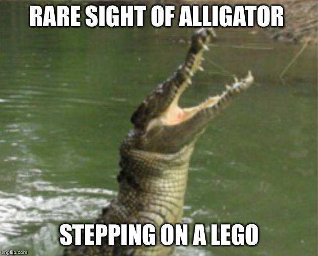One rare sight | RARE SIGHT OF ALLIGATOR STEPPING ON A LEGO | image tagged in once in a lifetime | made w/ Imgflip meme maker