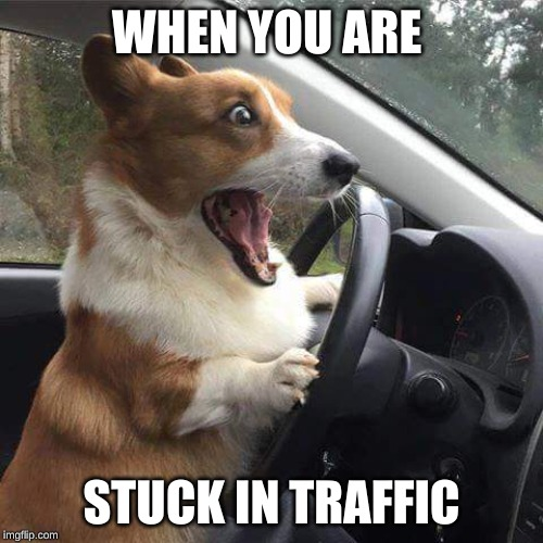 Rage Corgi |  WHEN YOU ARE; STUCK IN TRAFFIC | image tagged in rage corgi | made w/ Imgflip meme maker