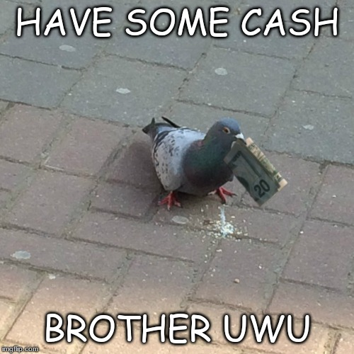 Clever pidgeon | HAVE SOME CASH BROTHER UWU | image tagged in clever pidgeon | made w/ Imgflip meme maker
