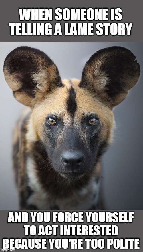 I'm All Ears |  WHEN SOMEONE IS TELLING A LAME STORY; AND YOU FORCE YOURSELF TO ACT INTERESTED BECAUSE YOU'RE TOO POLITE | image tagged in memes,hyena,lame,animals,polite | made w/ Imgflip meme maker
