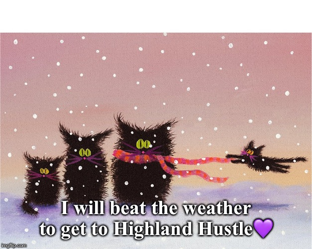 Cats in the wind |  I will beat the weather to get to Highland Hustle💜 | image tagged in cats,hustle,wind | made w/ Imgflip meme maker