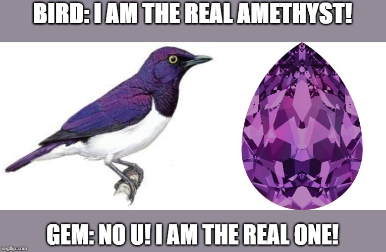 BIRD: I AM THE REAL AMETHYST! GEM: NO U! I AM THE REAL ONE! | image tagged in purple,bird,jewelry | made w/ Imgflip meme maker