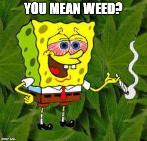 Weed | YOU MEAN WEED? | image tagged in weed | made w/ Imgflip meme maker