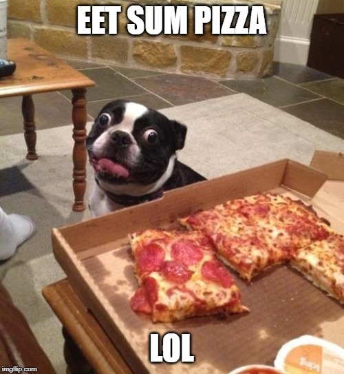 Hungry Pizza Dog | EET SUM PIZZA LOL | image tagged in hungry pizza dog | made w/ Imgflip meme maker