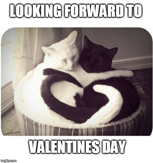 LOOKING FORWARD TO VALENTINES DAY | image tagged in cats,valentine's day,cute cat | made w/ Imgflip meme maker