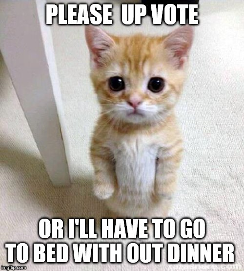Cute Cat |  PLEASE  UP VOTE; OR I'LL HAVE TO GO TO BED WITH OUT DINNER | image tagged in memes,cute cat | made w/ Imgflip meme maker