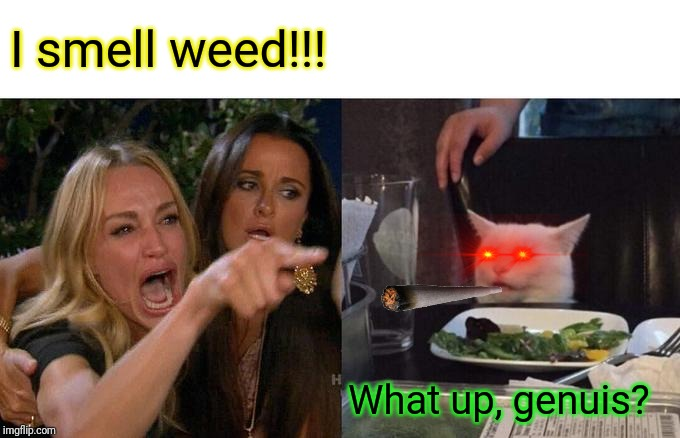 Woman Yelling At Cat Meme | I smell weed!!! What up, genuis? | image tagged in memes,woman yelling at cat | made w/ Imgflip meme maker