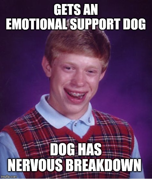 Bad Luck Brian |  GETS AN EMOTIONAL SUPPORT DOG; DOG HAS NERVOUS BREAKDOWN | image tagged in memes,bad luck brian | made w/ Imgflip meme maker