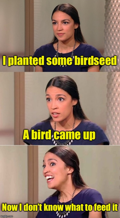 Nothing like a fresh bird right out of the garden |  I planted some birdseed; A bird came up; Now I don't know what to feed it | image tagged in bad pun ocasio-cortez,bird,seeds | made w/ Imgflip meme maker