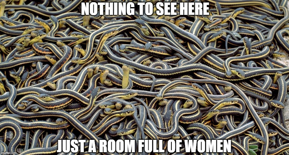 NOTHING TO SEE HERE JUST A ROOM FULL OF WOMEN | image tagged in snakes,women,group | made w/ Imgflip meme maker