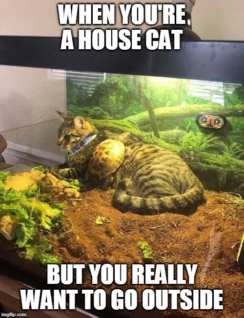 Inside Outside Inside Cat | WHEN YOU'RE A HOUSE CAT BUT YOU REALLY WANT TO GO OUTSIDE | image tagged in memes,cat,cats,turtles,turtle,pets | made w/ Imgflip meme maker