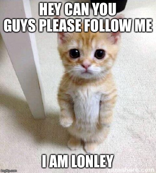 Cute Cat |  HEY CAN YOU GUYS PLEASE FOLLOW ME; I AM LONELY | image tagged in memes,cute cat | made w/ Imgflip meme maker