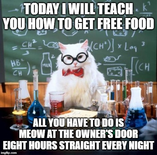Warning, if a shoe fly out of the doorway, run like hell and hide for exactly five minute before starting up again. | TODAY I WILL TEACH YOU HOW TO GET FREE FOOD ALL YOU HAVE TO DO IS MEOW AT THE OWNER'S DOOR EIGHT HOURS STRAIGHT EVERY NIGHT | image tagged in memes,chemistry cat | made w/ Imgflip meme maker