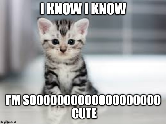 I KNOW I KNOW; I'M SOOOOOOOOOOOOOOOOOOO  CUTE | image tagged in cute cat,cats,cute,adorable | made w/ Imgflip meme maker