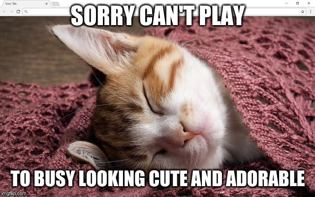 SORRY CAN'T PLAY; TO BUSY LOOKING CUTE AND ADORABLE | image tagged in cute,adorable,cute cat,funny memes,cat meme | made w/ Imgflip meme maker