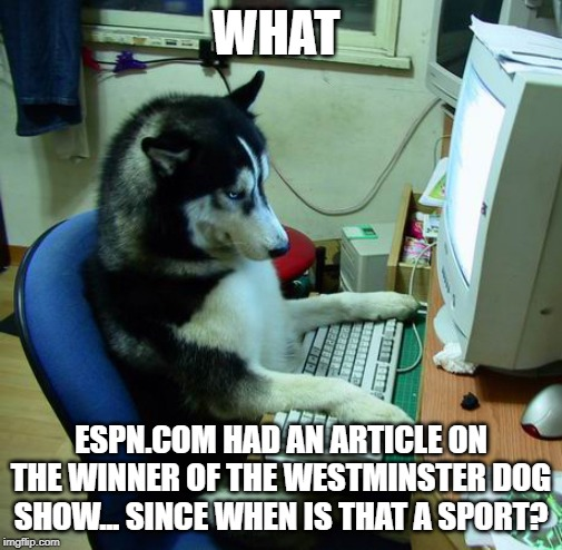 I Have No Idea What I Am Doing Meme | WHAT ESPN.COM HAD AN ARTICLE ON THE WINNER OF THE WESTMINSTER DOG SHOW... SINCE WHEN IS THAT A SPORT? | image tagged in memes,i have no idea what i am doing | made w/ Imgflip meme maker