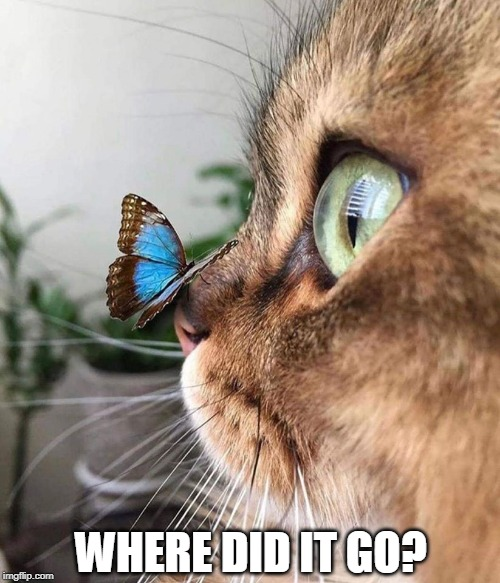 WHERE DID IT GO? | image tagged in cats,funny cats,cute cat | made w/ Imgflip meme maker