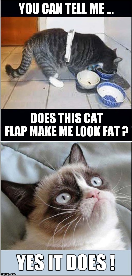 Grumpys Fat Shaming ! | YOU CAN TELL ME ... YES IT DOES ! DOES THIS CAT FLAP MAKE ME LOOK FAT ? | image tagged in fun,grumpy cat,fat cat | made w/ Imgflip meme maker