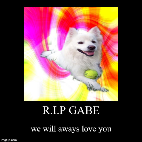 R.I.P GABE | we will aways love you | image tagged in funny,demotivationals | made w/ Imgflip demotivational maker