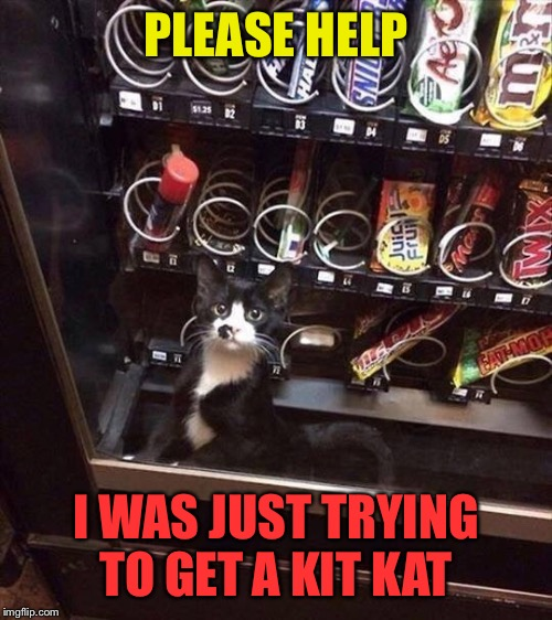 Caught Cat |  PLEASE HELP; I WAS JUST TRYING TO GET A KIT KAT | image tagged in cats,candy bar,vending machine,cute kitten,funny picture | made w/ Imgflip meme maker