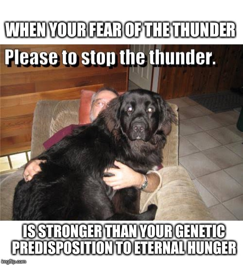 WHEN YOUR FEAR OF THE THUNDER; IS STRONGER THAN YOUR GENETIC PREDISPOSITION TO ETERNAL HUNGER | image tagged in dog,scared,scared dog,thunder,storm,hungry | made w/ Imgflip meme maker
