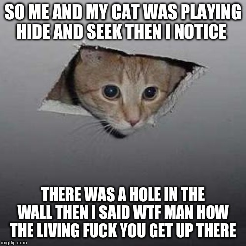 Ceiling Cat Meme | SO ME AND MY CAT WAS PLAYING HIDE AND SEEK THEN I NOTICE THERE WAS A HOLE IN THE WALL THEN I SAID WTF MAN HOW THE LIVING F**K YOU GET UP THE | image tagged in memes,ceiling cat | made w/ Imgflip meme maker