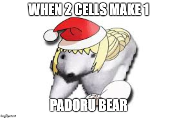 Padoru Padoru | WHEN 2 CELLS MAKE 1 PADORU BEAR | image tagged in memes | made w/ Imgflip meme maker