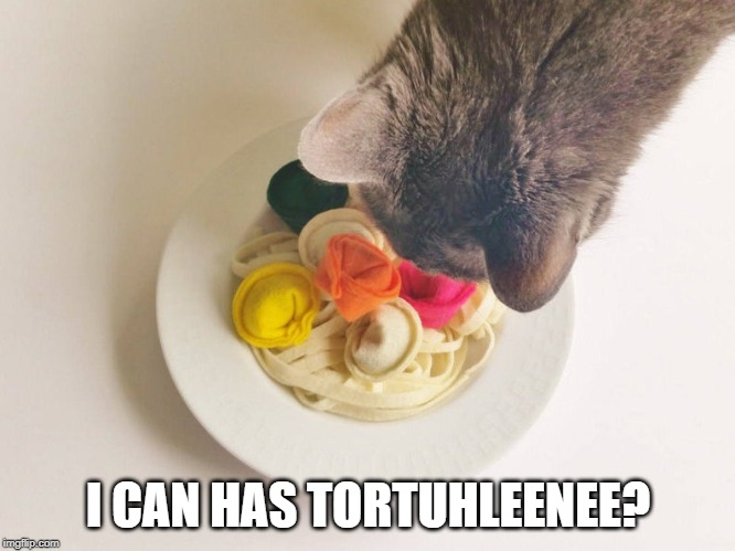 Today Is National Tortellini Day!  In Honor Of This Fine Holiday & Cats - I Give You Cat a la Tortellini! |  I CAN HAS TORTUHLEENEE? | image tagged in pasta,cats,funny cat memes,funny memes | made w/ Imgflip meme maker