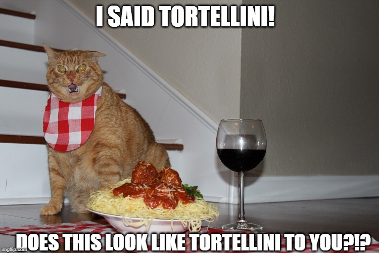 In Honor of National Tortellini Day and Cats All Around the World | I SAID TORTELLINI! DOES THIS LOOK LIKE TORTELLINI TO YOU?!? | image tagged in cats,pasta,funny memes | made w/ Imgflip meme maker