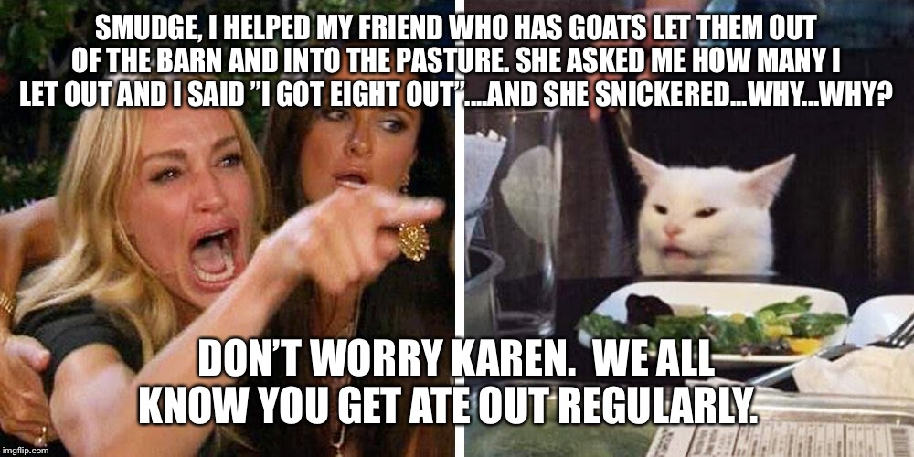"Smudge the cat | SMUDGE, I HELPED MY FRIEND WHO HAS GOATS LET THEM OUT OF THE BARN AND INTO THE PASTURE. SHE ASKED ME HOW MANY I LET OUT AND I SAID ""I GOT EI 