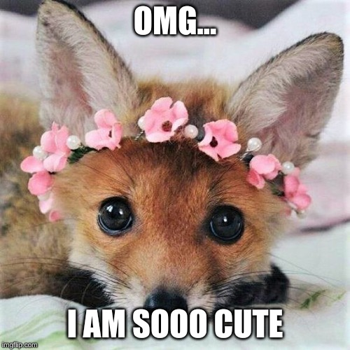 OMG... I AM SOOO CUTE | image tagged in cute,adorable,fox,cub,baby | made w/ Imgflip meme maker