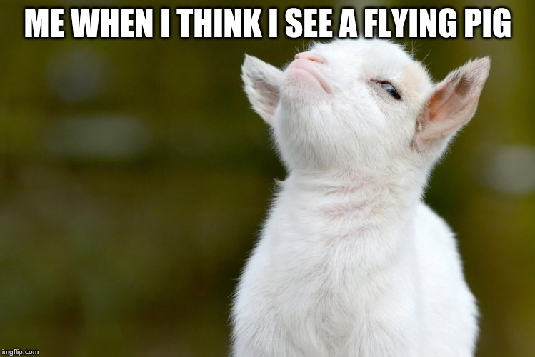ME WHEN I THINK I SEE A FLYING PIG | image tagged in proud baby goat | made w/ Imgflip meme maker