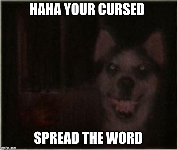 smile dog | HAHA YOUR CURSED SPREAD THE WORD | image tagged in smile dog | made w/ Imgflip meme maker