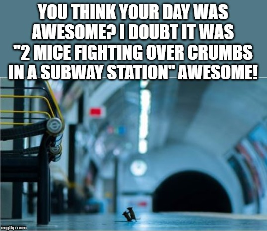 "Wildlife Picture of the Year |  YOU THINK YOUR DAY WAS AWESOME? I DOUBT IT WAS ""2 MICE FIGHTING OVER CRUMBS IN A SUBWAY STATION"" AWESOME! 