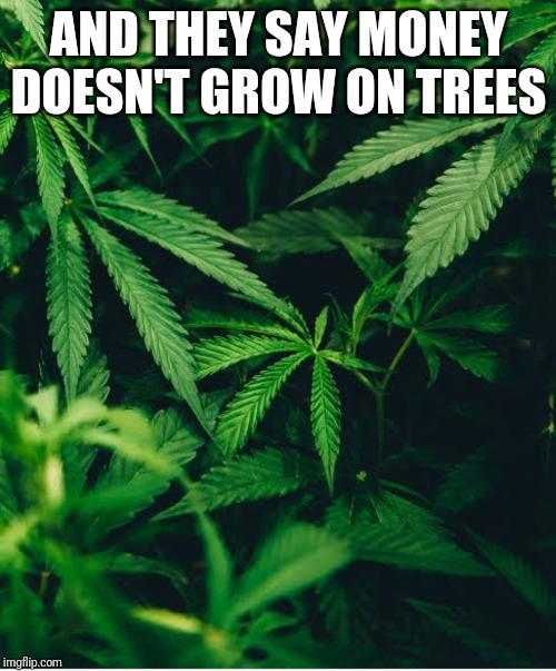AND THEY SAY MONEY DOESN'T GROW ON TREES | image tagged in weed,funny | made w/ Imgflip meme maker