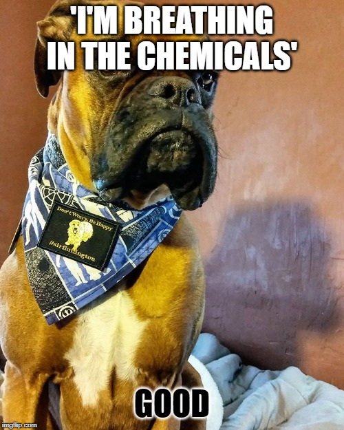 Grumpy Dog |  'I'M BREATHING IN THE CHEMICALS'; GOOD | image tagged in grumpy dog,radioactive,imagine dragons | made w/ Imgflip meme maker