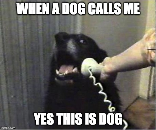 Yes this is dog | WHEN A DOG CALLS ME YES THIS IS DOG | image tagged in yes this is dog | made w/ Imgflip meme maker