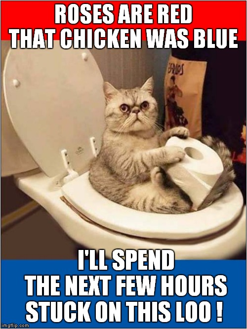 Valentines Toilet Woes ! | ROSES ARE RED THAT CHICKEN WAS BLUE STUCK ON THIS LOO ! I'LL SPEND THE NEXT FEW HOURS | image tagged in fun,roses are red,cats,valentines day,food poisoning | made w/ Imgflip meme maker