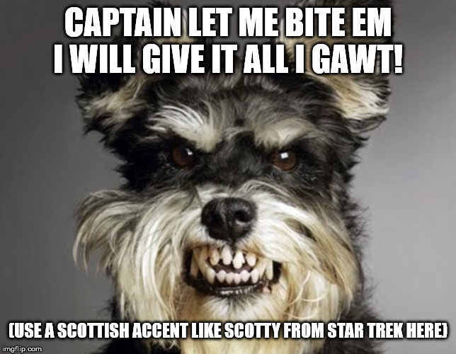 Mean Dog | CAPTAIN LET ME BITE EM I WILL GIVE IT ALL I GAWT! (USE A SCOTTISH ACCENT LIKE SCOTTY FROM STAR TREK HERE) | image tagged in mean dog | made w/ Imgflip meme maker