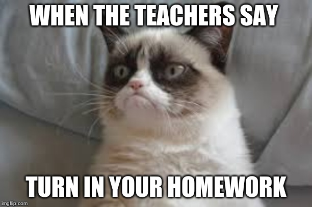Grumpy cat | WHEN THE TEACHERS SAY TURN IN YOUR HOMEWORK | image tagged in grumpy cat | made w/ Imgflip meme maker